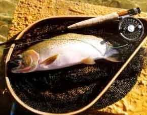 Cutthroat Trout Cutthroat Trout
